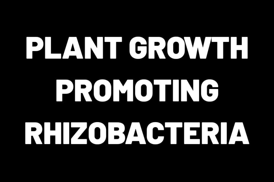 Plant Growth Promoting Rhizobacteria