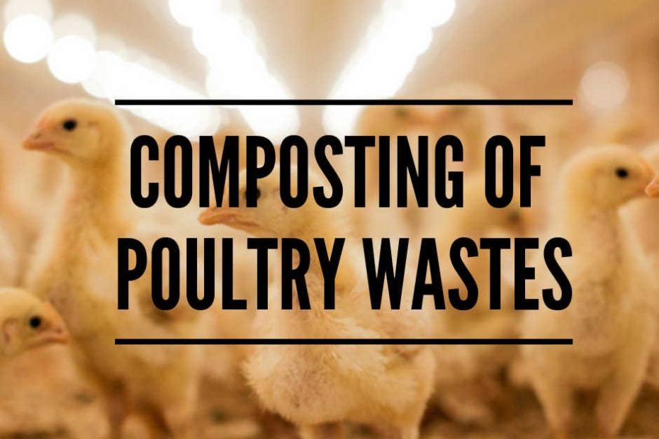poultry waste