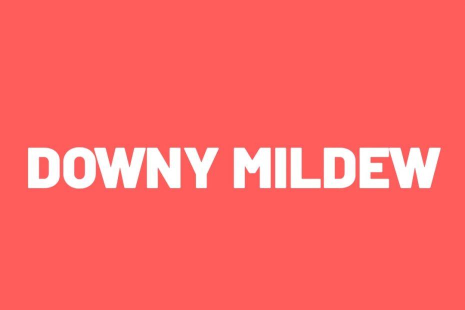 Downny mildew
