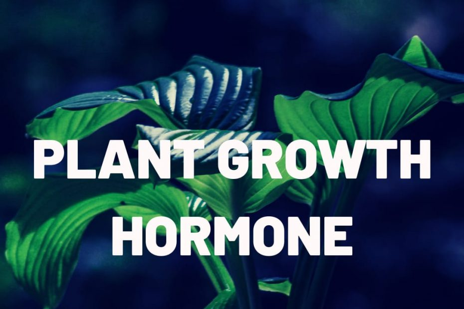 plant growth hormone