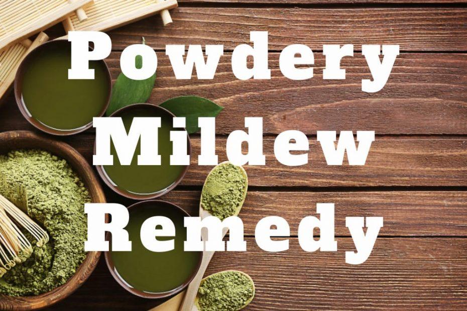 powdery mildew remedy